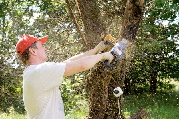 Homem que trabalha com motosserra, cortar árvore