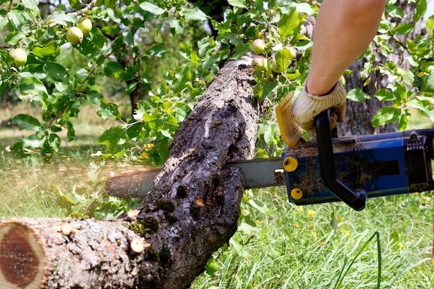 Homem que trabalha com serra elétrica, cortando árvore de perto