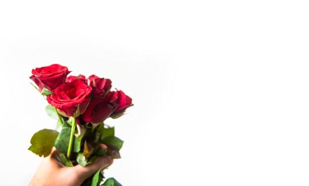 Homem segurando o buquê de rosas vermelhas na mão no fundo branco para dar uma rosa no dia dos namorados amor