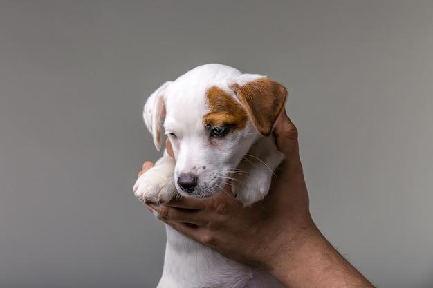 Homem segurando o cachorrinho fofo jack russel nas mãos