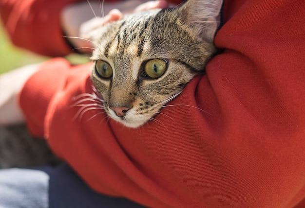 Homem segurando o gato desabrigado strret com grandes olhos verde-oliva. amizade de animais e pessoas