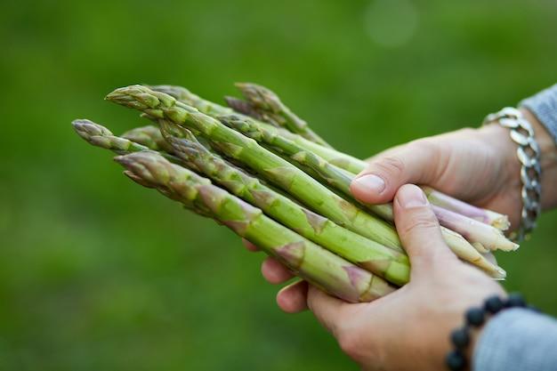 Homem segurando um monte de aspargos verdes nas mãos ao ar livre, spears of fresh green aspargos no sol, copie o espaço para o texto. colheita, pronto para cozinhar, dieta vegana saudável, comida local.