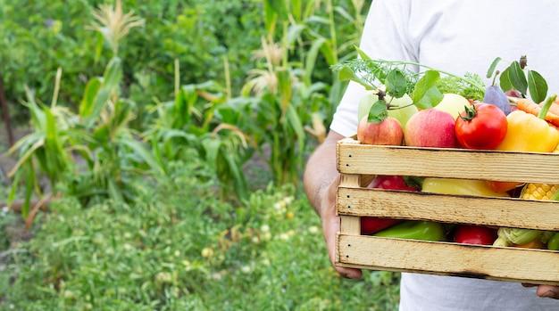 Homem segurando uma caixa de madeira cheia de frutas e vegetais orgânicos maduros no jardim