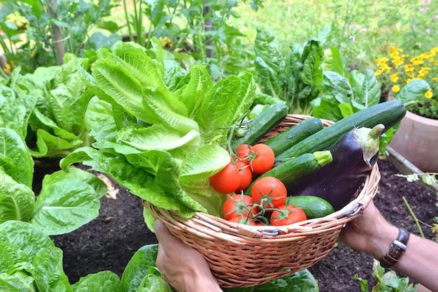 Homem segurando uma cesta cheia de vegetais sazonais recém-colhidos no jardim