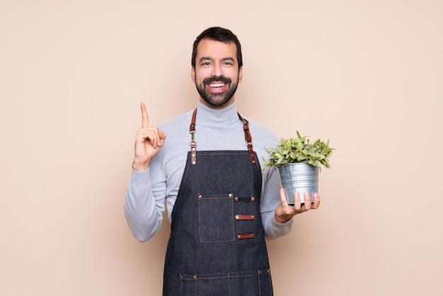 Homem segurando uma planta sobre parede isolada, apontando para cima uma ótima idéia