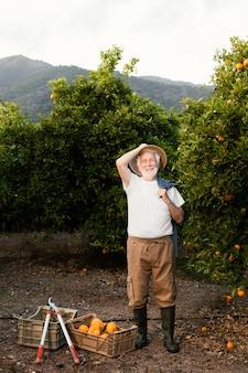 Homem sênior colhendo laranjeiras frescas sozinho