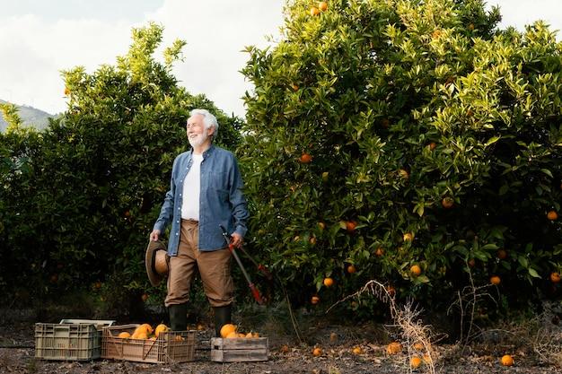 Homem sênior colhendo laranjeiras sozinho