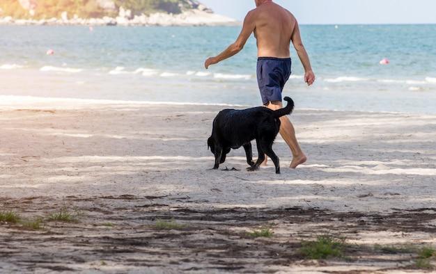 Homem sênior, com, pretas, cachorro labrador, executando, praia