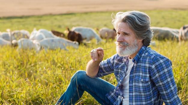 Homem sênior de alto ângulo com cabras na fazenda