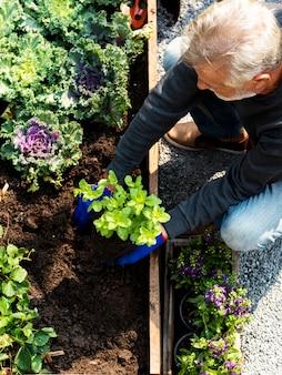 Homem sênior, plantando, legumes, em, jardim, quintal