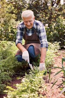 Homem sênior trabalhando no campo com plantas Foto gratuita