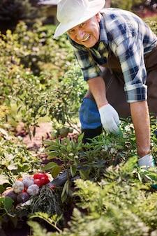 Homem sênior trabalhando no campo com uma caixa de legumes