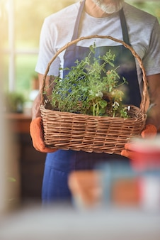Homem trabalhando, segurando uma cesta com ervas picantes