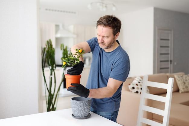 Homem transplantando calamondina de planta de casa para um grande vaso de flores
