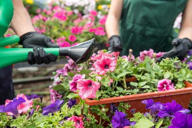 Homens com as mãos enluvadas cuidam e verificam as flores na estufa