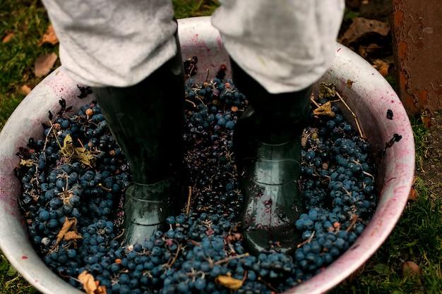 Homens esmagando uvas maduras por encaixe em botas.