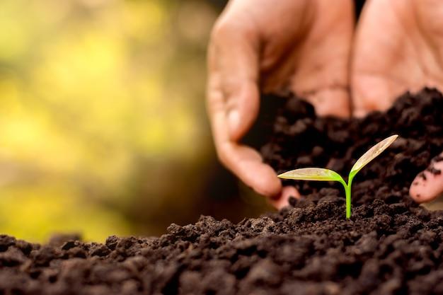 Homens mão estão plantando as mudas no solo.