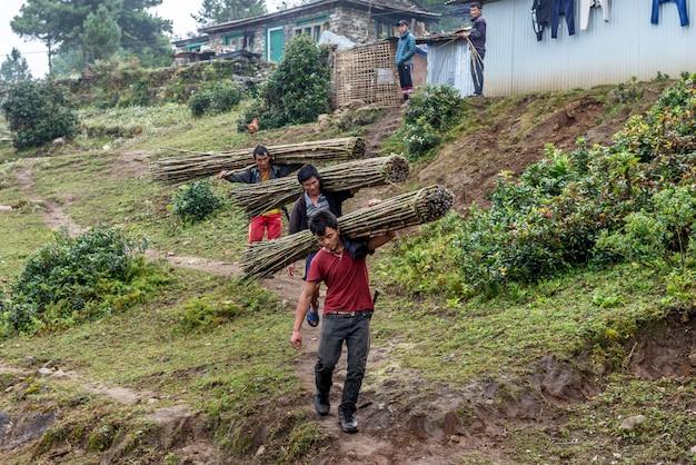 Homens nepaleses carregam quadril de bambu verde enquanto caminhava na aldeia em khumbu, nepal