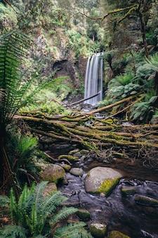Hopetoun cai em great otway national park, victoria, austrália.
