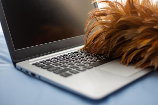 Hora de limpar o laptop pela vassoura de penas.