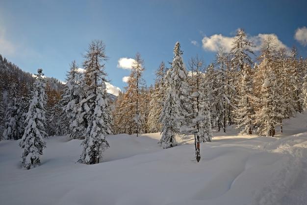 Horário de inverno nos alpes, floresta de lariço na neve