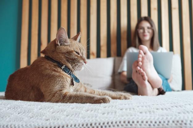 Horários flexíveis e trabalho remoto, gato doméstico deita na cama, mulher usando laptop para trabalhar, deitada no quarto, em casa