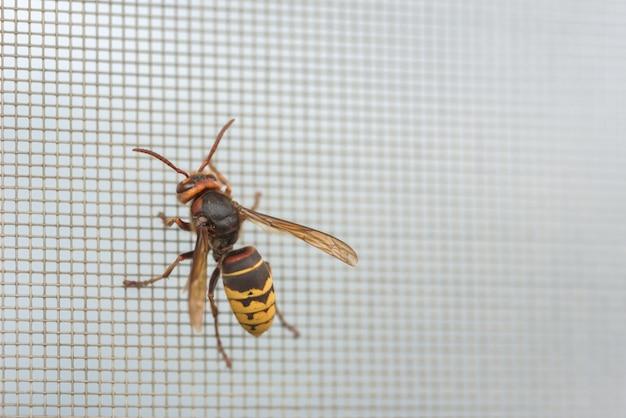 Hornet em uma grade