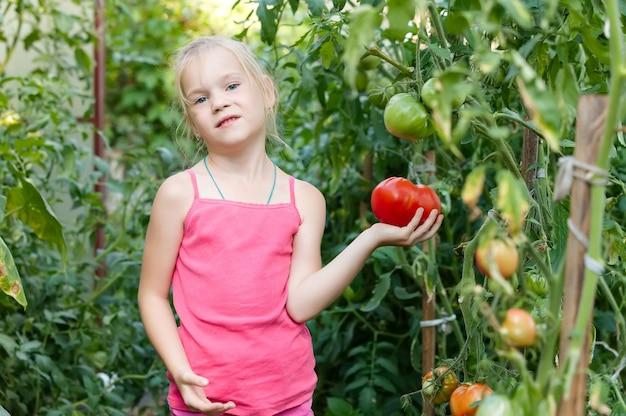 Horta - adorável jardineiro com safras de tomates maduros