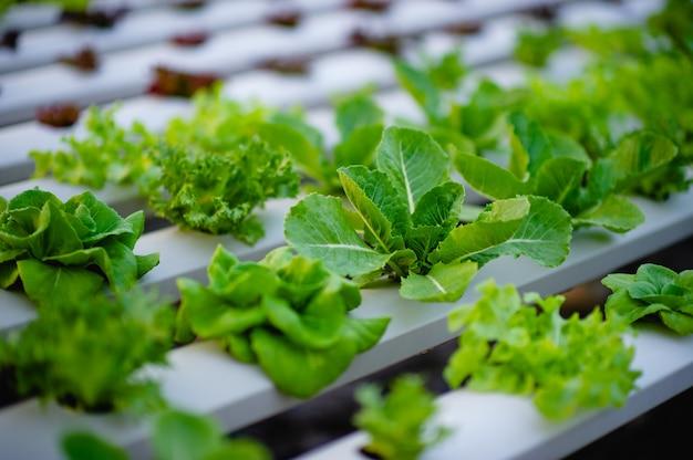 Horta de salada de vegetais orgânicos