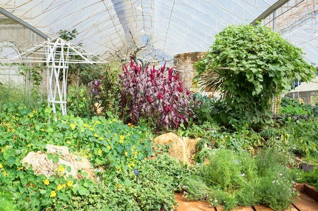 Horta em uma casa verde
