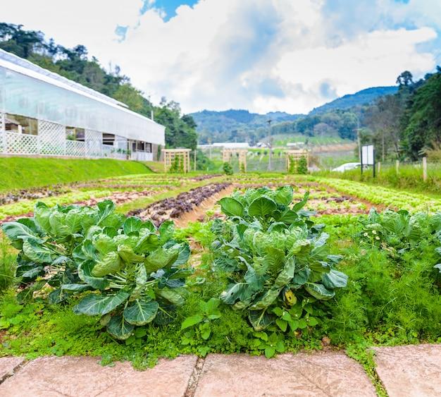 Horta, ervas e vegetais no quintal jardim formal
