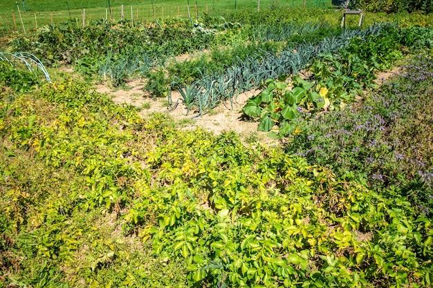 Horta orgânica com fileiras de plantações