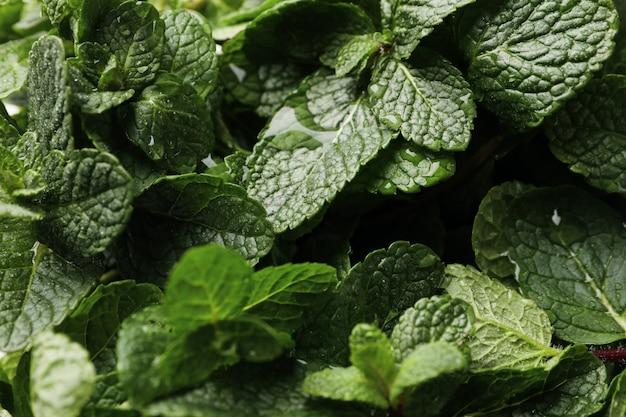 Hortelã verde fresca com água cai textura, close-up