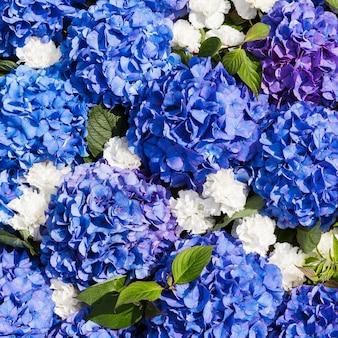 Hortênsia azul flores fundo na vista superior
