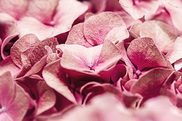 Hortênsia de coral macio hydrangea macrophylla ou pétalas de flores de hortensia. profundidade de campo rasa para uma sensação suave e sonhadora.