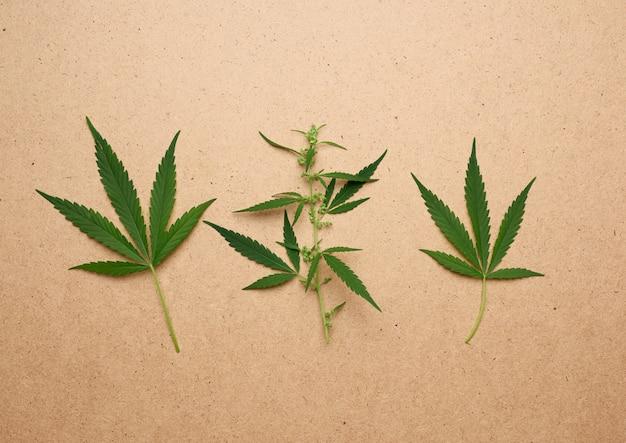 Hree folhas verdes de cânhamo em um fundo marrom