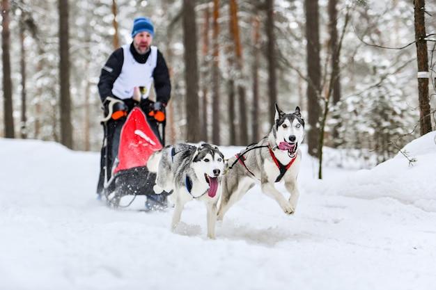 Husky siberiano cão de trenó esporte