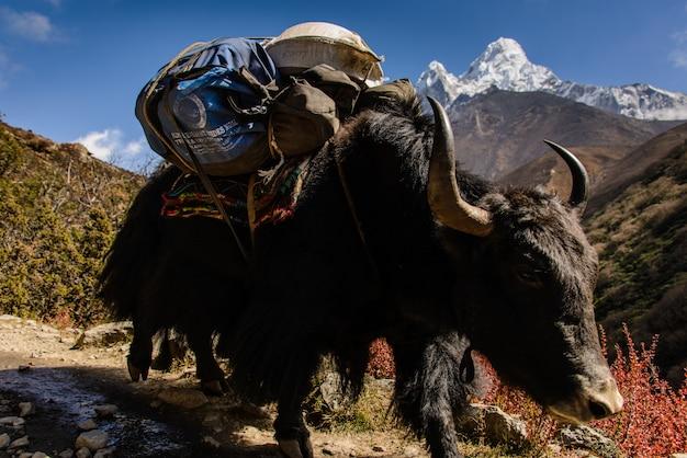 Iaque no nepal
