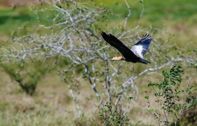Íbis pretos voadores rodeados por vegetação sob a luz do sol com um fundo desfocado