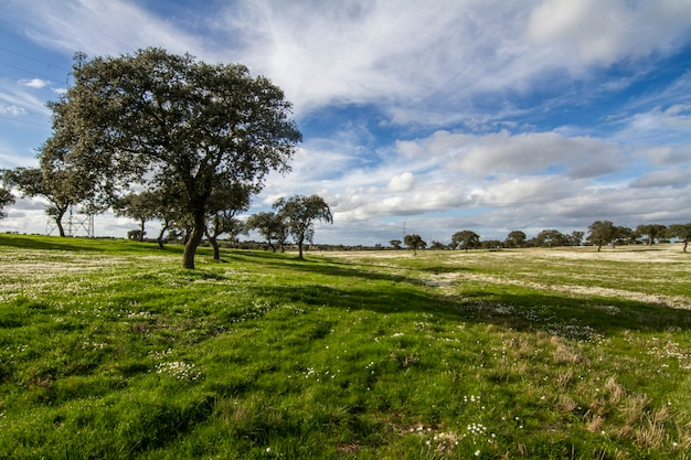 Ideia bonita de uma paisagem do campo da mola na região do alentejo, portugal.