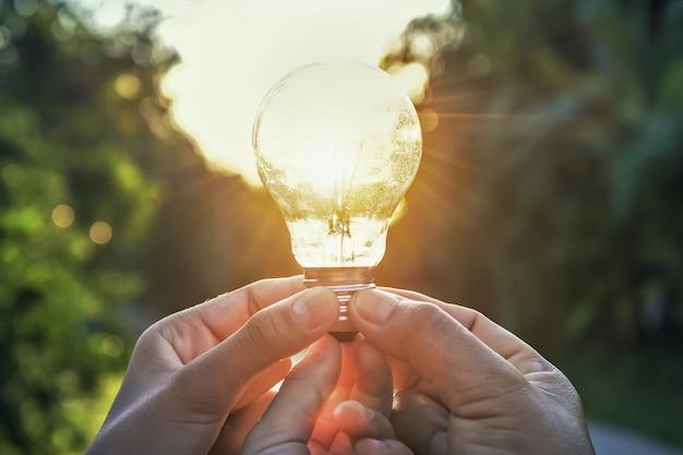 Idéia conceito, energia solar, em, natureza, três mão, segurando, luz, bulbo, e, amanhecer