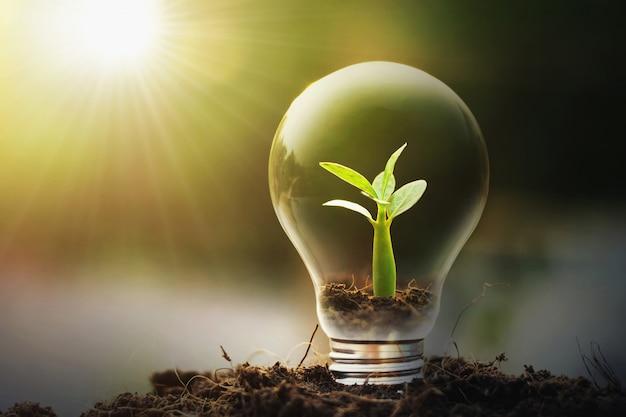 Idéia conceito, poupar energia, jovem, planta, e, bulbo leve