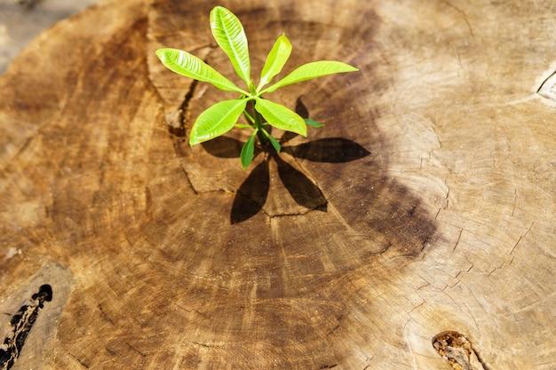 Ideia superior da vida nova com o broto crescente da plântula da madeira velha conceito da ecologia.