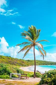 Idílica praia tropical com areia branca, água azul-turquesa do oceano e grandes palmeiras