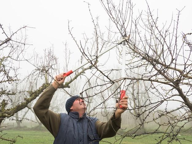 Idoso com gorro de lã podando árvores frutíferas com tesoura em um dia de neblina