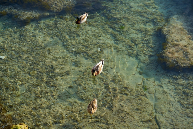Ifach penon vista do pôr do sol de moraira com patos
