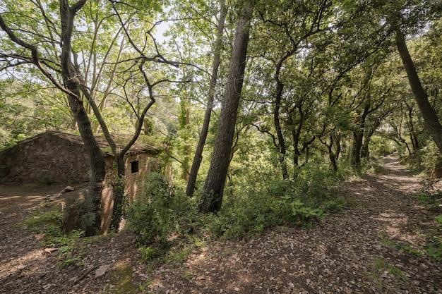 Igreja abandonada na floresta