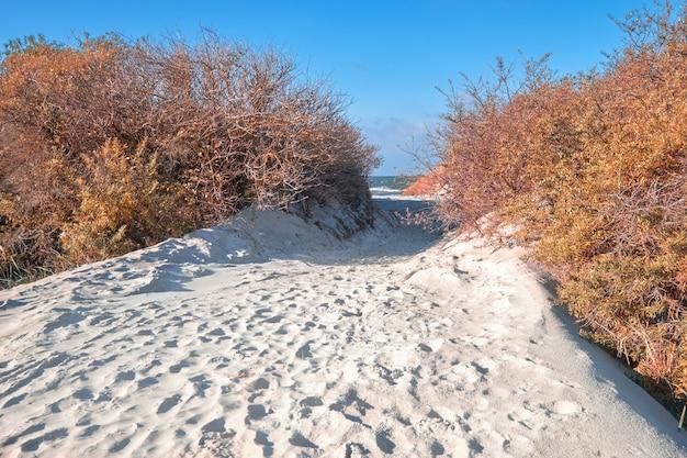 Ilha de hiddensee, na costa do mar báltico do norte da alemanha, entrada arenosa para a praia através de dunas à beira-mar
