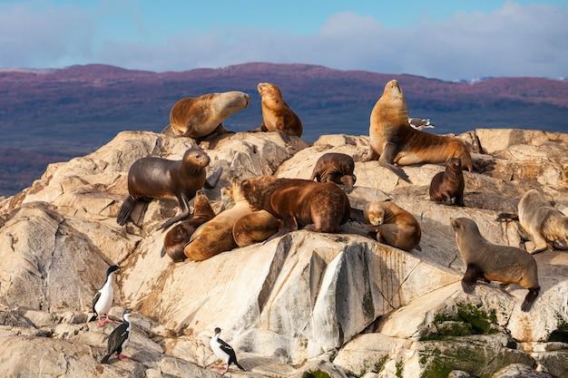 Ilha seal perto de ushuaia