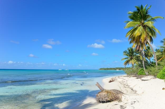 Ilha tropical com palmeiras, areia limpa e céu azul.